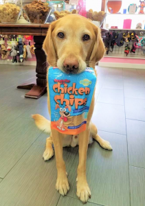 Dog Holding a Bag of Treats at Woof Gang Bakery & Grooming