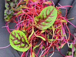 Medicinal Herbs at the Farmacy at the Farmers Market
