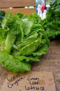 Organic Lettuce from the Farmers Market