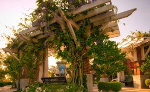 Trellis with Vines in Centennial Park