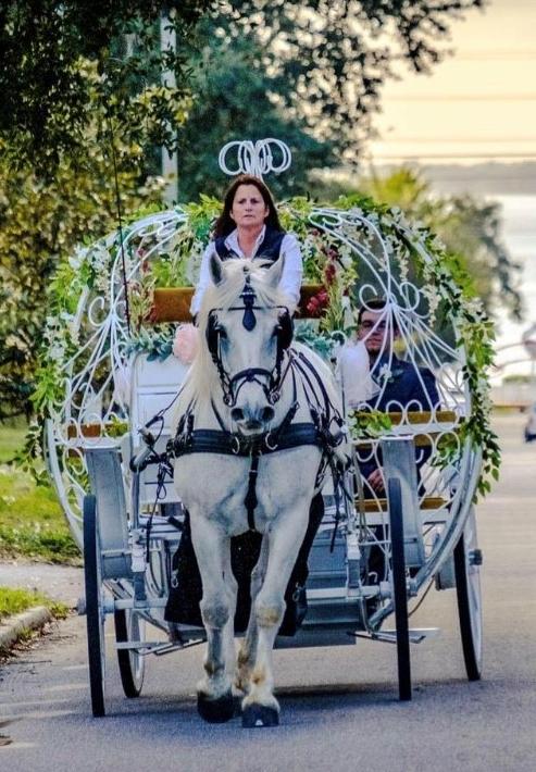 Cinderella Carriage Tour Pic